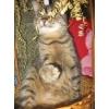 Кошечка Дарья ждёт хозяина!