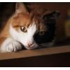 Кошека в добрые руки