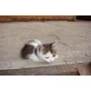 Маленький котенок ищет дом!