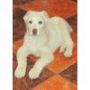 пропала собака породы Алабай на ул. Десняка просьба вернуть за хорошее вознаграждение!