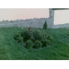 рулонные и посевные газоны