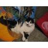 Кошечка Варвара ждёт хозяина!
