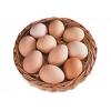 Яйцо домашней курицы