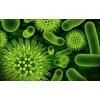 Дыхательный тест на Синдром Избыточного Бактериального Роста в Донецке