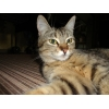 Отдам бесплатно красивого котенка.