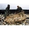 Продаем рыбу, камку в г. Геническе.  Тел. 066-096-33-78.