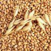 Пшеница, ячмень, комбикорм