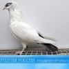 Сборник фильмов по голубеводству