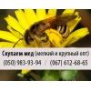 Покупаем пчелиный мед крупным и мелким оптом в Запорожье